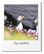 The wildlife